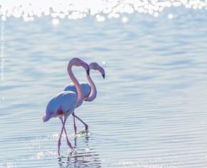 Flamingos in pastel