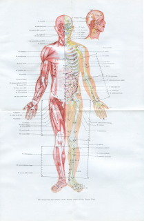 The Frequently-used Points of the Frontal Aspect of the Human Body