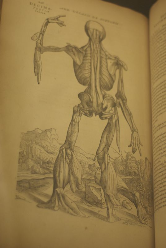 Does this anatomy drawing remind anyone else of Persistence of Memory?