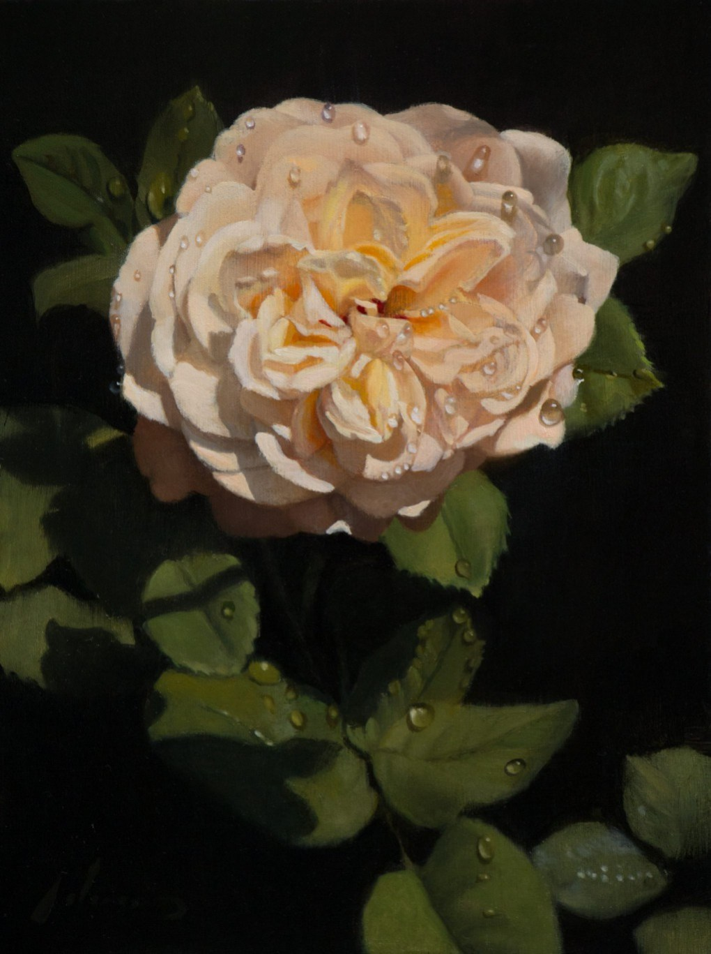White Rose | 9x12 inches | oil on panel