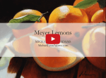 <b>Meyer Lemons</b><h5>Annotated Video Demo</h5>