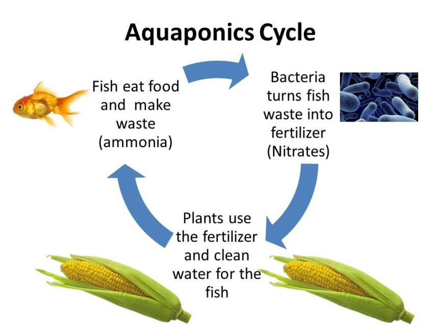 Basement aquaponics system