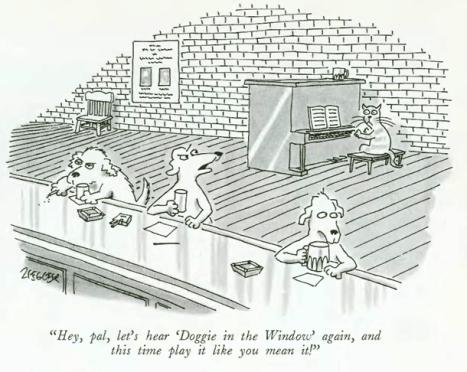 doggie-in-the-window