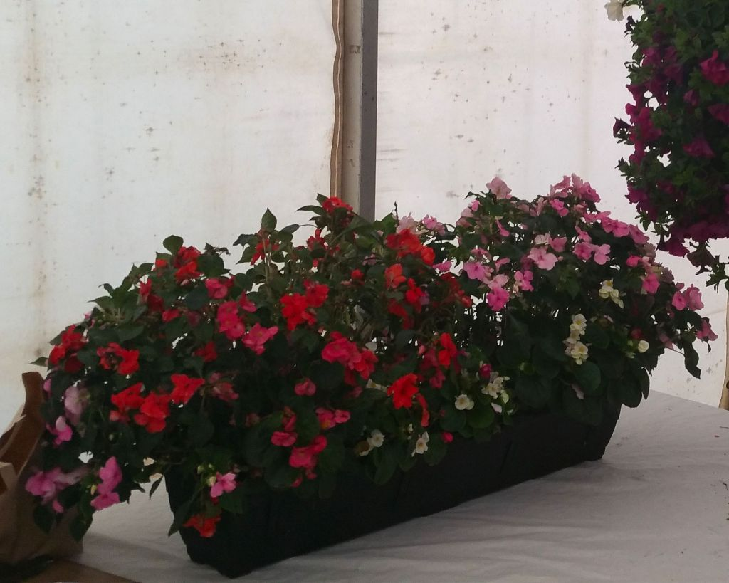 prize winner at 28th Swinford Agricultural show