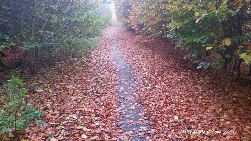 autumn colour 2016 in Swinford Co Mayo