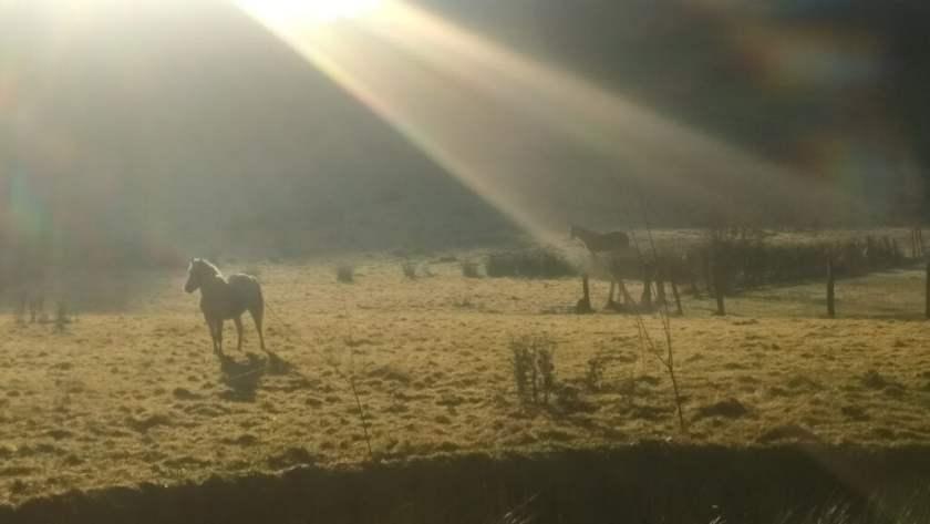 Paarden die ontbijten.