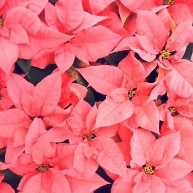 Pink 6'