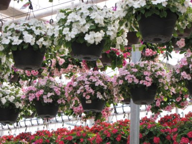 Spring at Michael's
