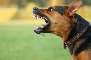 Can You Sue For Punitive Damages In A Dog Bite Case?
