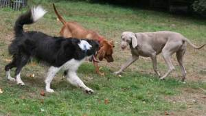 What Type of Dogs Are The Most Aggressive?