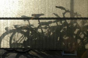 Would a Bike Lane on Westwood Boulevard Reduce Bike Accidents?