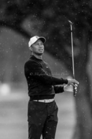 2018 Genesis Open Tiger Woods-7