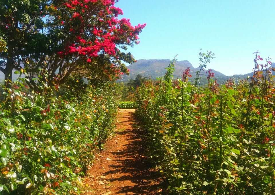 Stop and smell the roses at Chart Farm in Cape Town