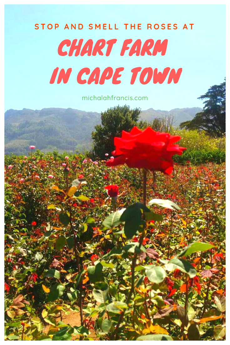 Stop and smell the roses at Chart Farm in Cape Town - michalah francis