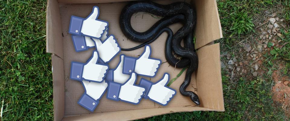 Wąż w pudełeczku z lajkami