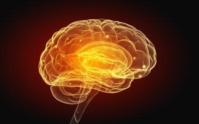 O krowach i czarnej strefie w mózgu