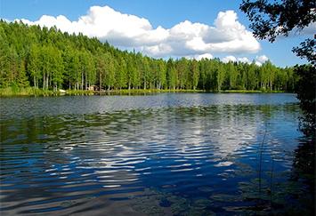 Bosque finlandés