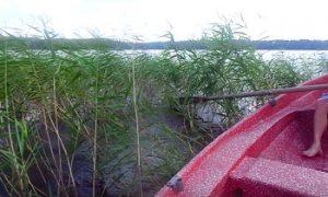 vegetación lago