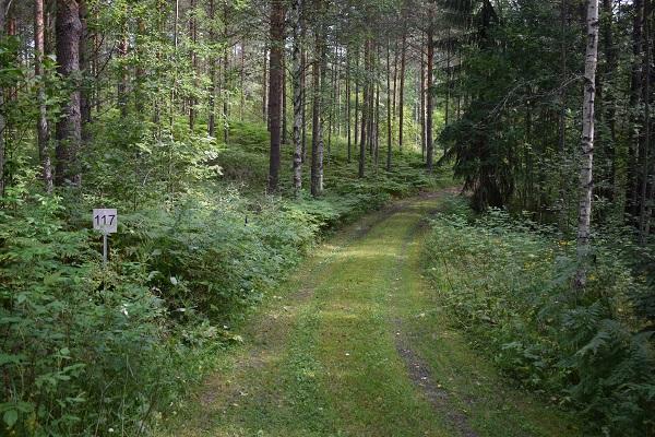 Camino bosque