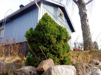 Tiempo Pascua Finlandia