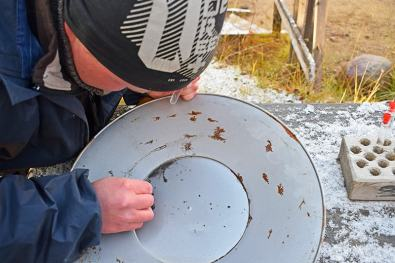 Buscar oro Laponia, Tankavaara