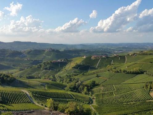 Wein, Barolo, Piemont, Wandern