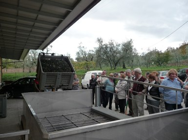 olives transported to the mill