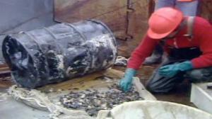 Fut  rejeté par la mer  sur une plage  russe.Il était éventré:de rapides expertises ont montré le niveau élevé de radiations à l'intérieur.