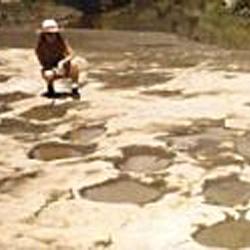 Empreintes découvertes au Congo ,il y a quelques années..la région du  fameux dinosaure.