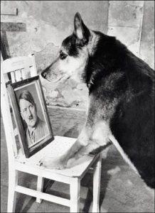 chien nazi dressage parole 003