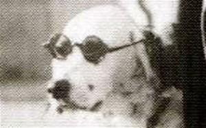 Le célèbre chien de Finlande qui défia les officiers nazi.