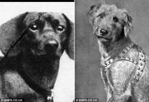Los Nazis trataron de enseñar a los perros a leer y hablar  06