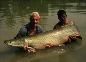 Un vrai poisson royal.