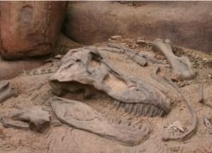 Le crâne de notre dinosaure ailé,tel que découvert.