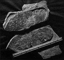 En 1968, un minéralogiste amateur W.J. Meister, à la recherche de fossiles de trilobites et de brachiopodes, vieux de 500 millions d'années, à Antelope Spring ( Utah ), trouva, à sa grande surprise en brisant une roche, ce qui ressemble à une empreinte de chaussure. Sur cette empreinte apparaît un trilobite écrasé.