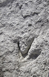 Empreintes de dinosaures