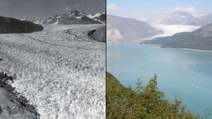 """Fondu! Liens de glace du glacier de """"Muir"""" -Gletscher en 1941. Tout est plein de glace. La photo de droite montre la zone dans l'État de l'Alaska à la même place 63 années plus tard,"""