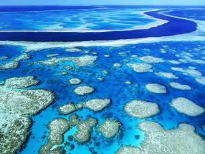 """La Grande Barrière de Corail  en Australie est non seulement le plus grand récif corallien du monde, elle est aussi la plus grande structure unique du monde faite par les organismes vivants. Le récif est situé au large de la côte nord-est de l'Australie et est si grand qu'il peut même être vu de l'espace! La zone étend un 1400 miles (2300 km incroyables) et est fabriqué à partir des millions de minuscules organismes vivants, appelés polypes coralliens. Le récif prend également en charge une grande variété d'espèces marines différentes; de baleines, des requins et des dauphins, des tortues, des raies pastenagues, des hippocampes et des millions de différentes espèces de poissons. La région est sans surprise un endroit incroyablement populaire pour la plongée sous-marine et a même été nommé par CNN comme l'une des """"sept merveilles naturelles du monde."""