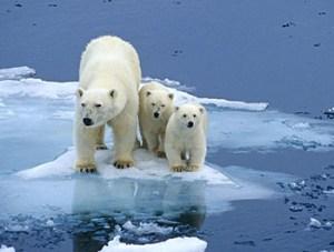 Extinction de la biodiversité 15 à 37% de la biodiversité auront disparu d'ici 2050 du fait du réchauffement planétaire, affirme un article publié en 2004 par un collectif de scientifiques du monde entier. Le rythme actuel de disparition des espèces de la planète est de 100 à 1000 fois supérieur au rythme naturel qu'on a connu depuis l'histoire de la terre. En savoir plus Extinction of biodiversity from 15 to 37% of biodiversity will have disappeared by 2050 because of global warming, says an article published in 2004 by a group of scientists worldwide. The current rate of species loss on the planet is 100 to 1000 times the natural rate that has been known since the history of the earth./