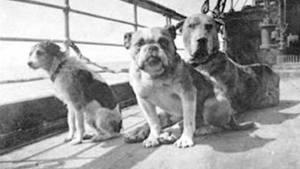Oui , il y avait des animaux à bord du  RMS Titanic . Parmi plusieurs chiens naviguant sur le navire, ce sont les trois seuls survivants.