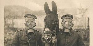Face aux gaz de combat,des soldats allemands portent des masques à gaz ainsi que leur mule.Cela se passait en 1916.