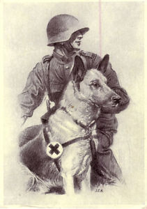 Ce chien sauva la vie de nombreux soldats allemands durant la guerre./This dog saved the lives of many German soldiers during the war.