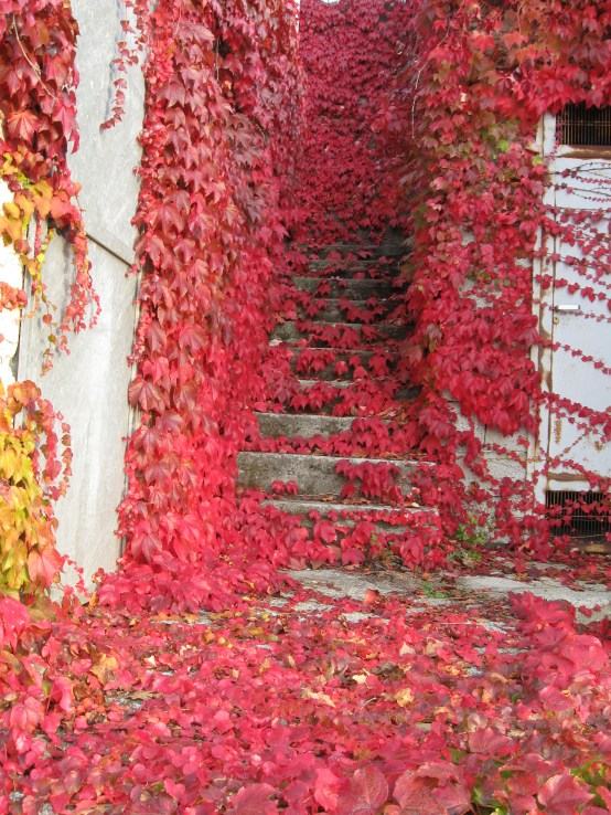 Autumn leaves on the back stairs