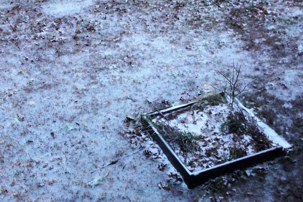 Day 021 Frozen Garden