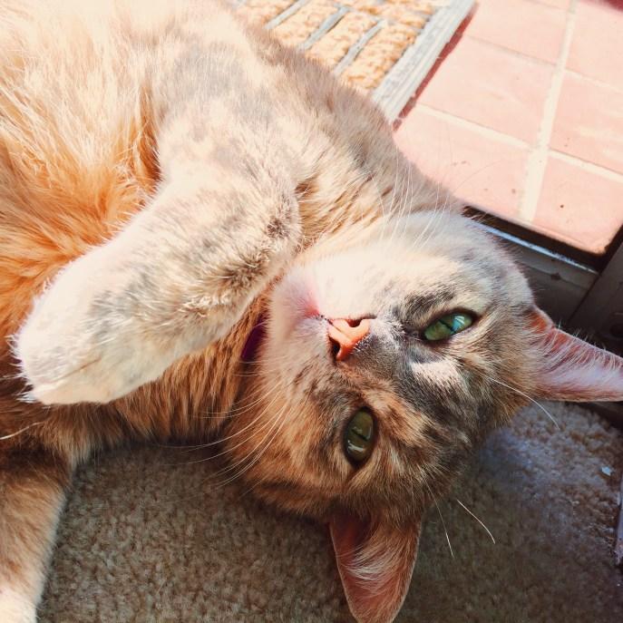 My sweet kitty girlie.
