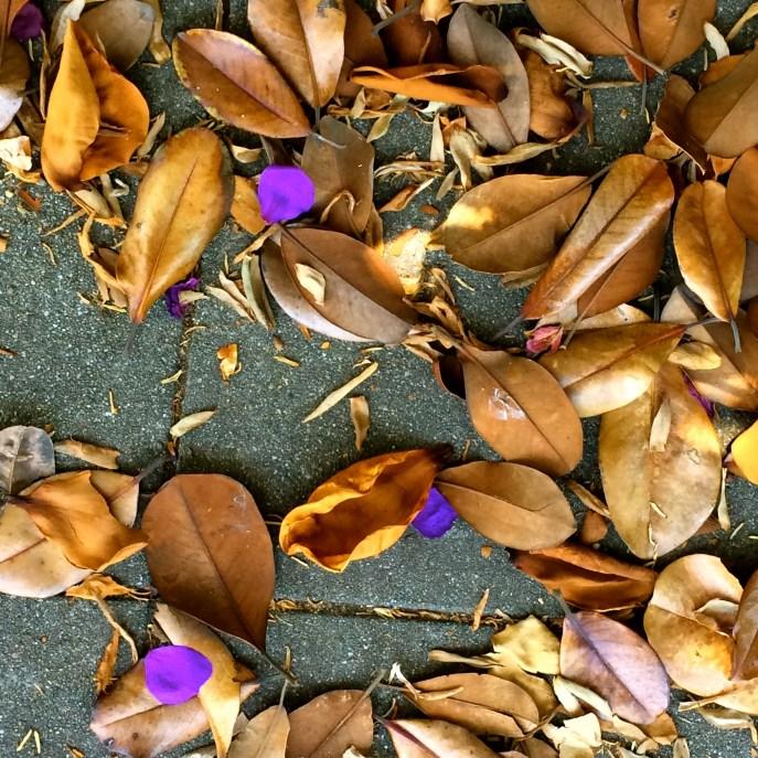 Purple petals, brown leaves. Ordinary sidewalk.