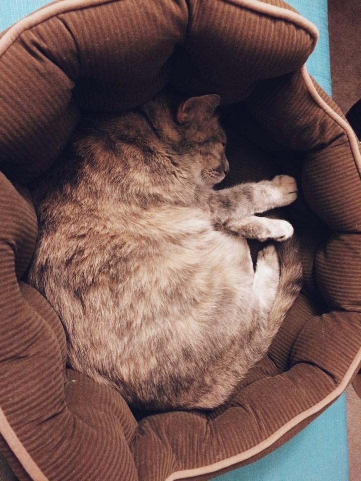 She loves her bed.
