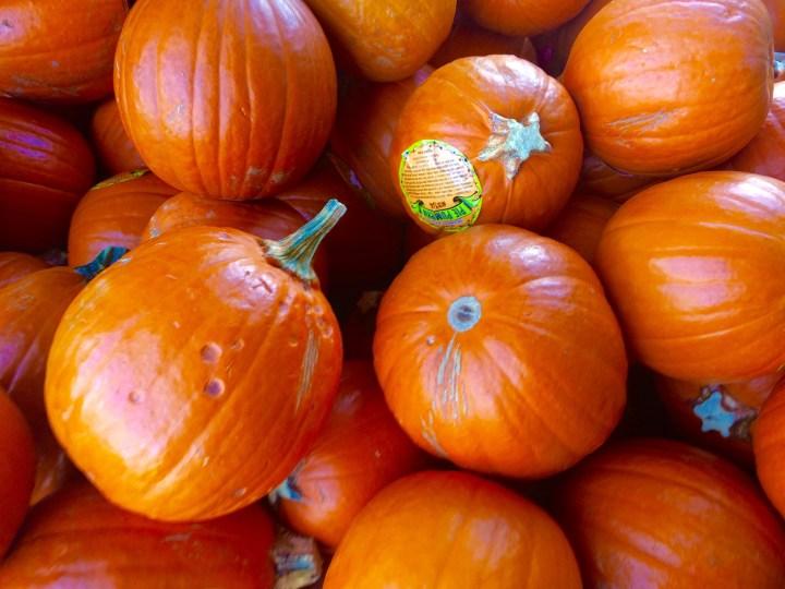 Pie pumpkins at Trader Joe's.