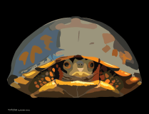 Vectorized turtle in his shell