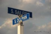 S. Sailfish